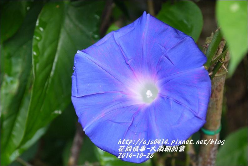 2014-10-大雨朝顏會18.jpg
