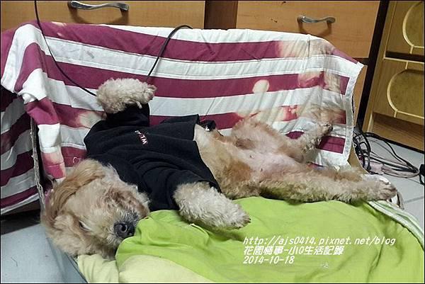 2014-11-小Q生活記事7.jpg