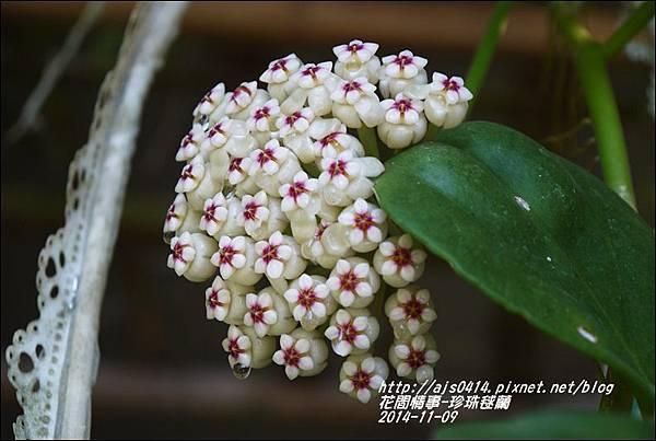2014-11-珍珠毬蘭4.jpg
