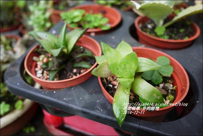2014-12-多肉植物23.jpg