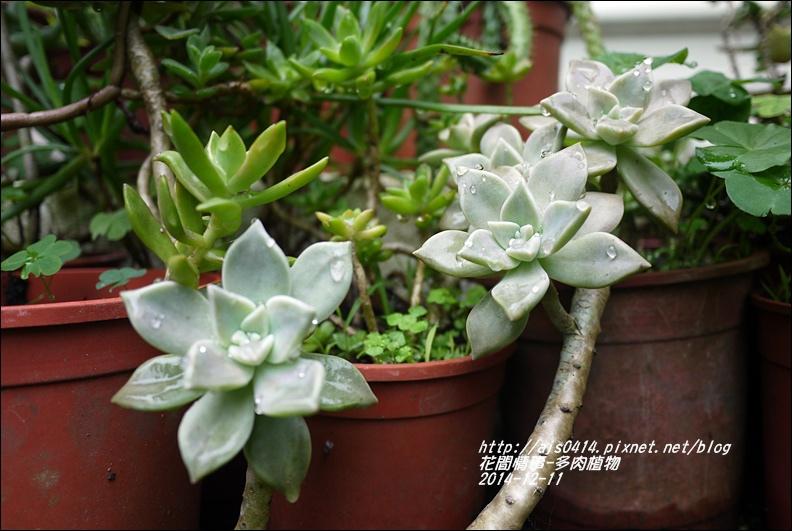 2014-12-多肉植物1.jpg