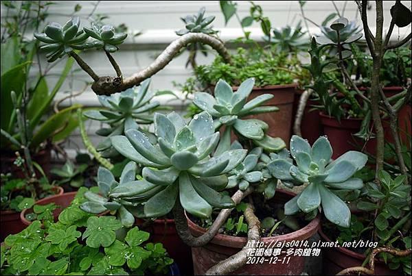 2014-12-多肉植物2.jpg