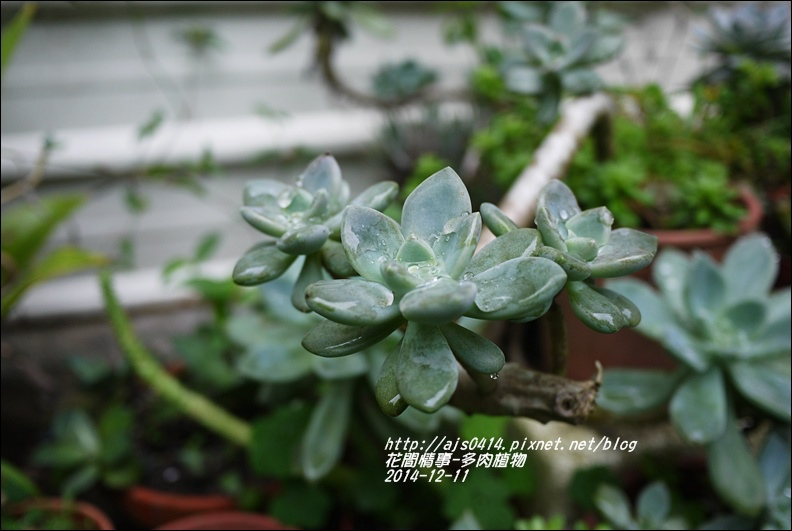 2014-12-多肉植物3.jpg