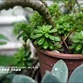 2014-12-多肉植物5.jpg