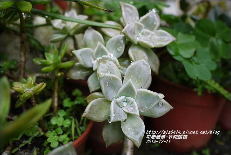 2014-12-多肉植物6.jpg
