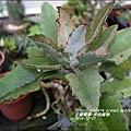 2014-12-多肉植物9.jpg