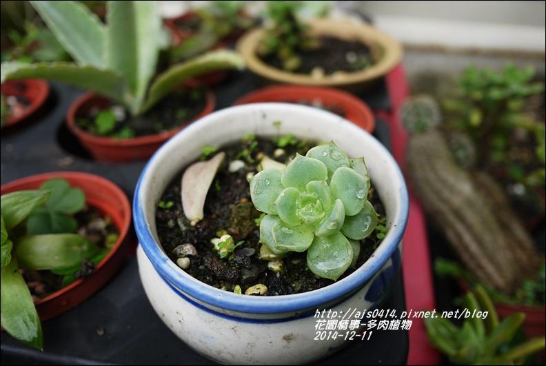 2014-12-多肉植物11.jpg