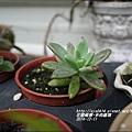 2014-12-多肉植物13.jpg