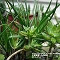 2014-12-多肉植物14.jpg