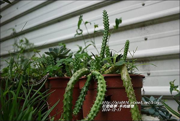 2014-12-多肉植物15.jpg
