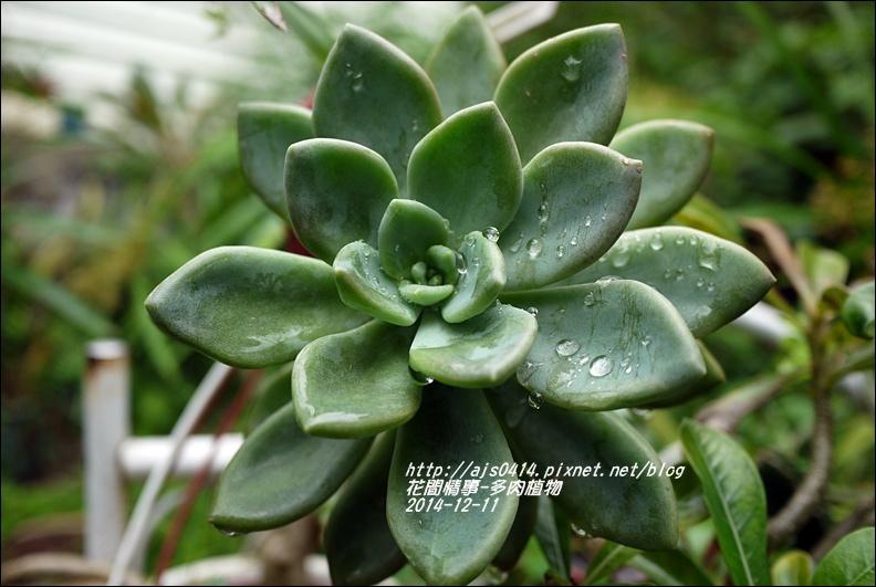 2014-12-多肉植物16.jpg