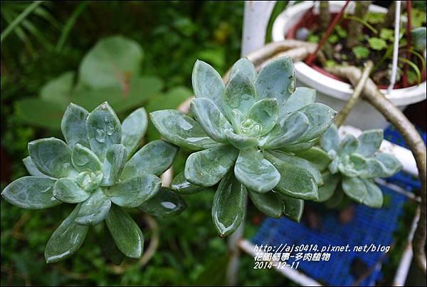 2014-12-多肉植物17.jpg