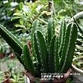 2014-12-多肉植物18.jpg
