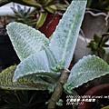 2014-12-多肉植物20.jpg
