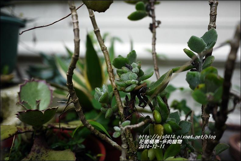 2014-12-多肉植物22.jpg