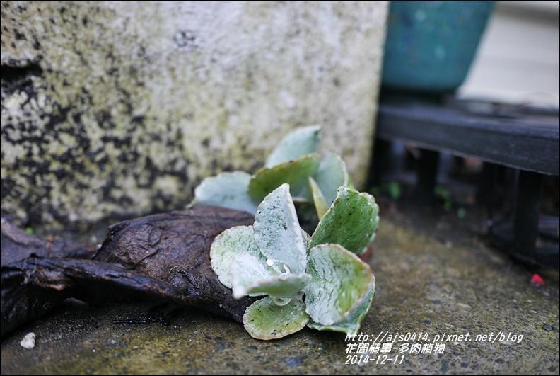 2014-12-多肉植物24.jpg