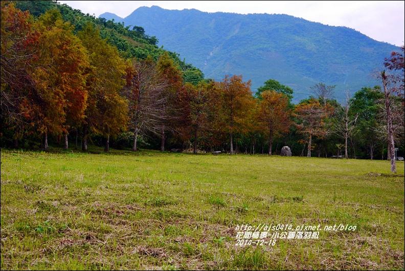 2014-12-獅子公園落羽松1.jpg