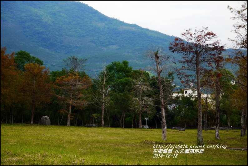 2014-12-獅子公園落羽松7.jpg