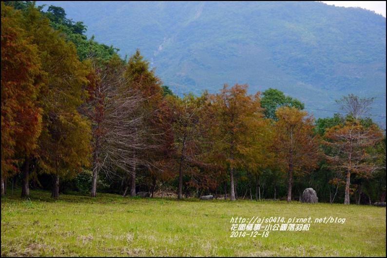 2014-12-獅子公園落羽松8.jpg