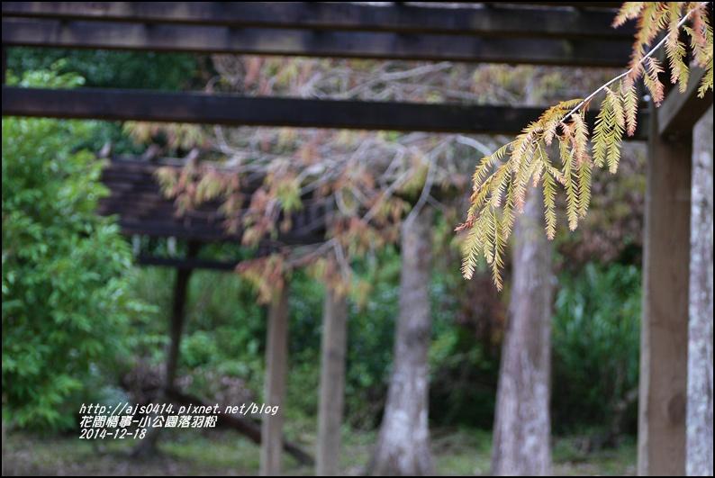 2014-12-獅子公園落羽松14.jpg