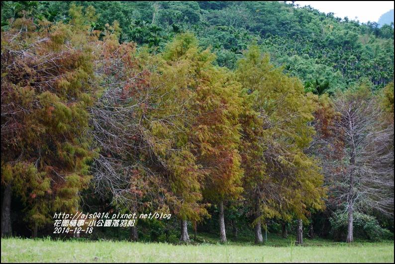2014-12-獅子公園落羽松16.jpg