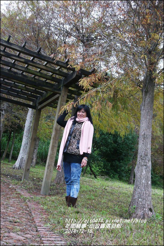 2014-12-獅子公園落羽松17.jpg
