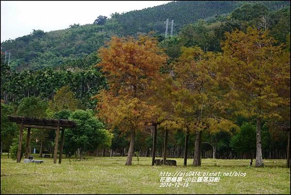 2014-12-獅子公園落羽松19.jpg