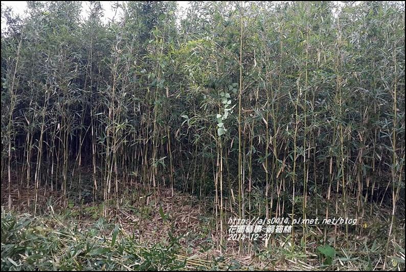 2014-12-箭筍林1.jpg