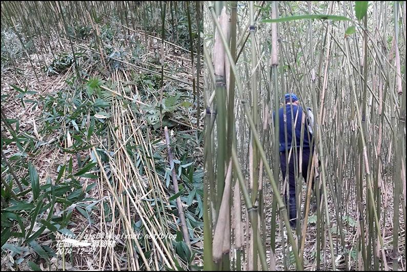 2014-12-箭筍林2.jpg