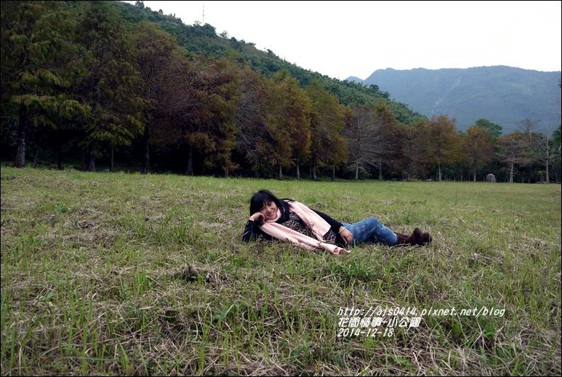 2014-12-獅子公園落羽松21.jpg