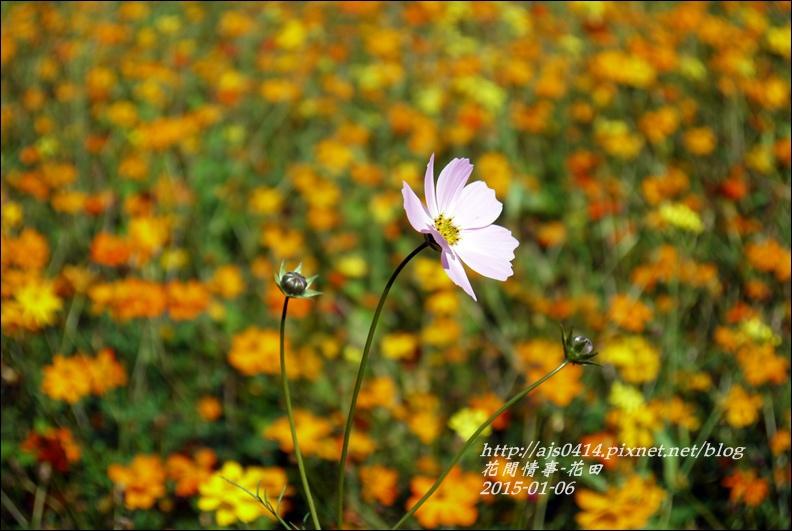 2015-01-波斯花田8.jpg