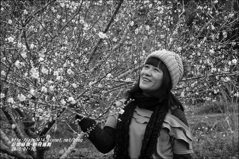 2015-01-梅飛攝舞21.jpg