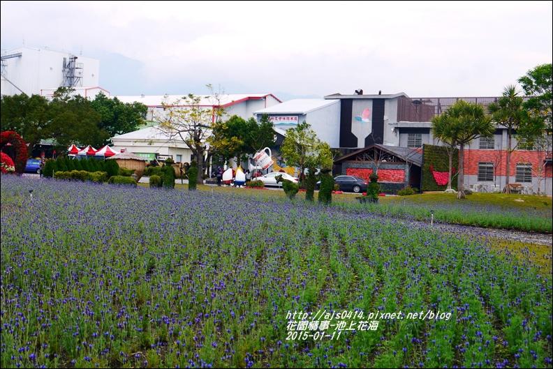 2015-01-池上花海6.jpg
