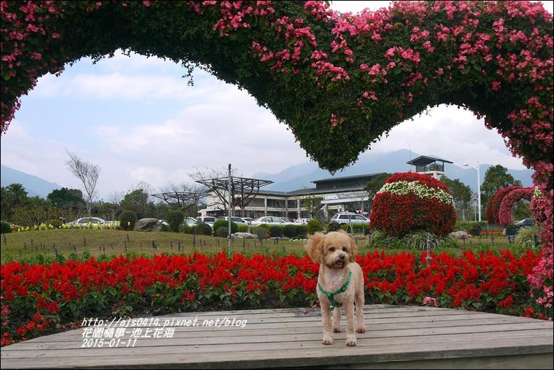 2015-01-池上花海16.jpg