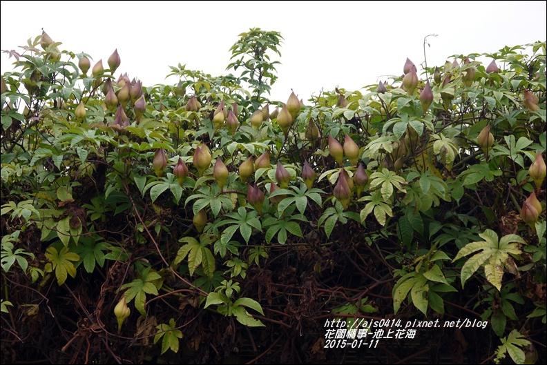 2015-01-池上花海25.jpg