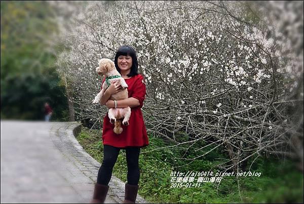 2015-01-羅山瀑布梅花香3.jpg