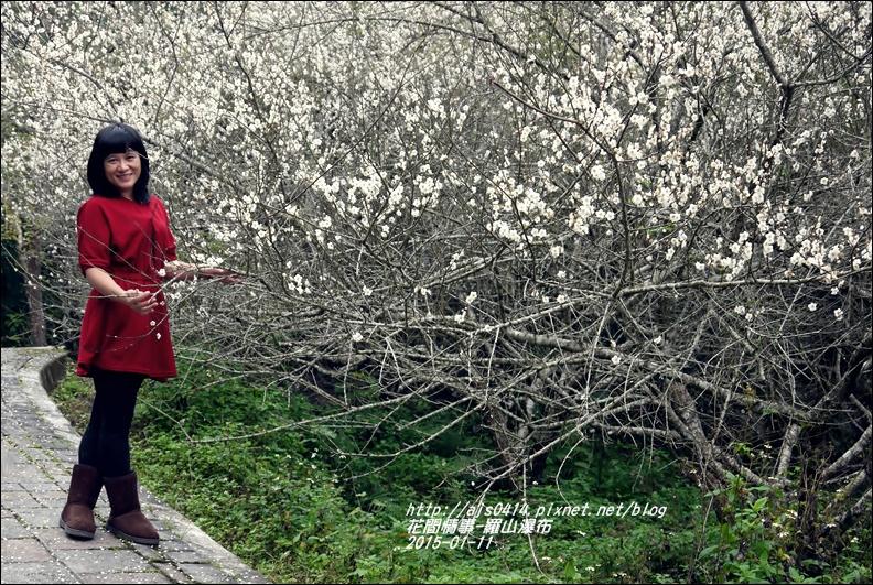 2015-01-羅山瀑布梅花香4.jpg