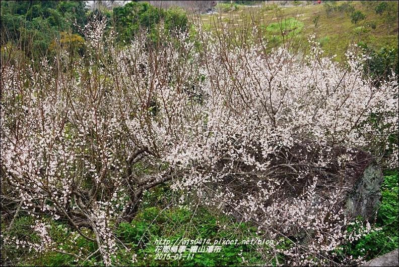 2015-01-羅山瀑布梅花香13.jpg