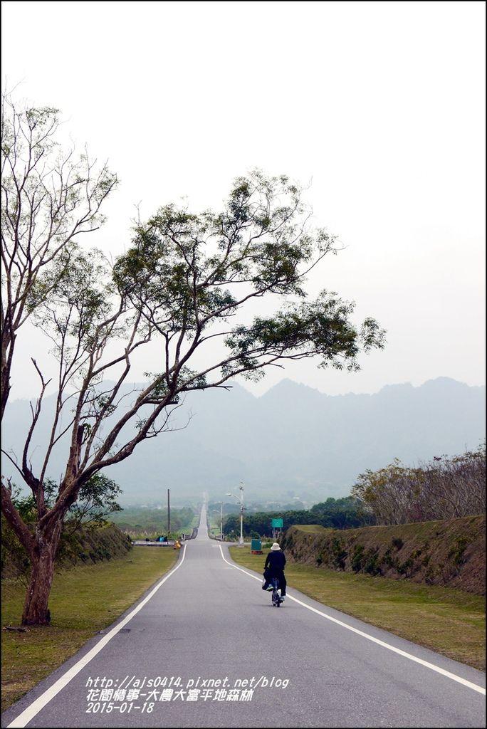 2015-01-大農大富平地森林27.jpg