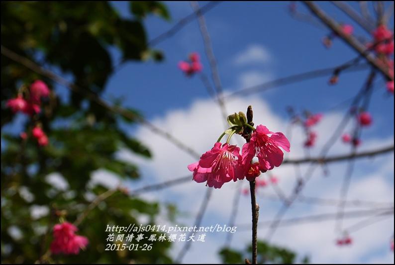 2015-01-鳳林櫻花大道5.jpg