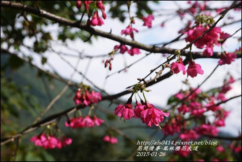 2015-01-鳳林櫻花大道6.jpg