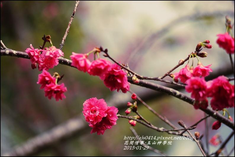 2015-01-玉山神學24.jpg