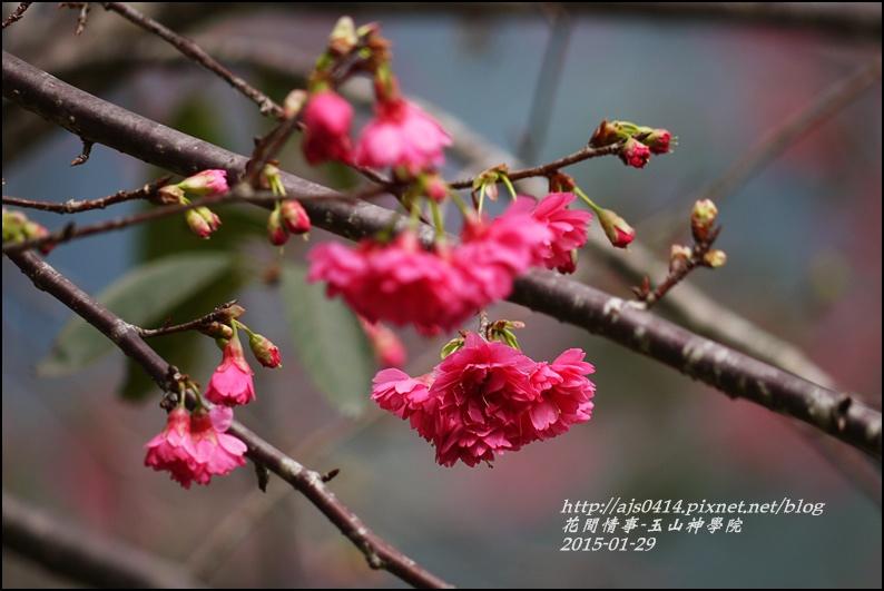2015-01-玉山神學院25.jpg