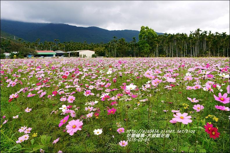 2015-02-大波斯花海7.jpg