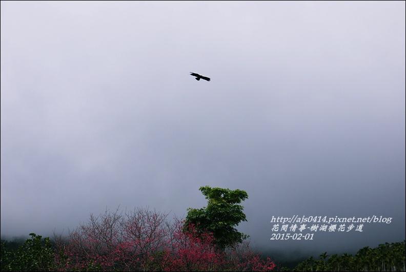 2015-02-樹湖櫻花步道2.jpg