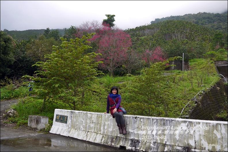 2015-02-樹湖櫻花步道3.jpg