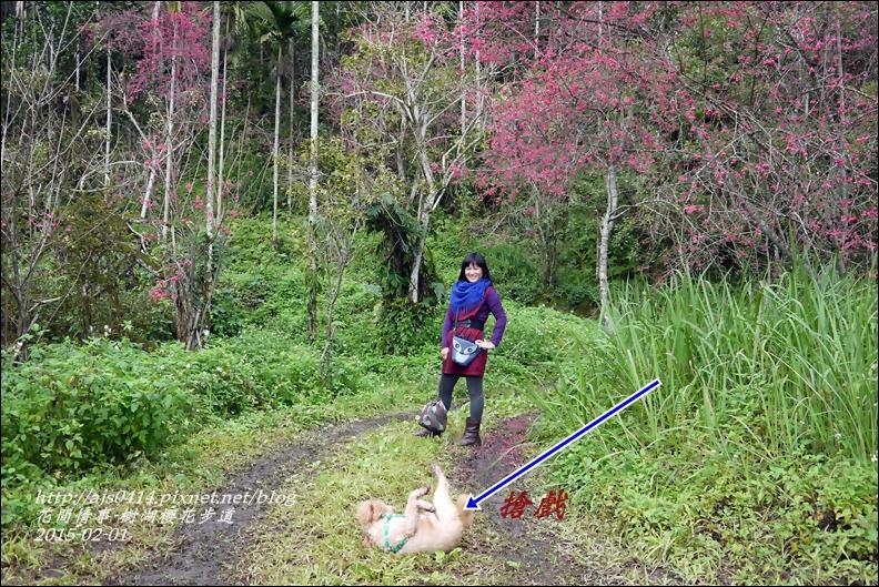 2015-02-樹湖櫻花步道9.jpg
