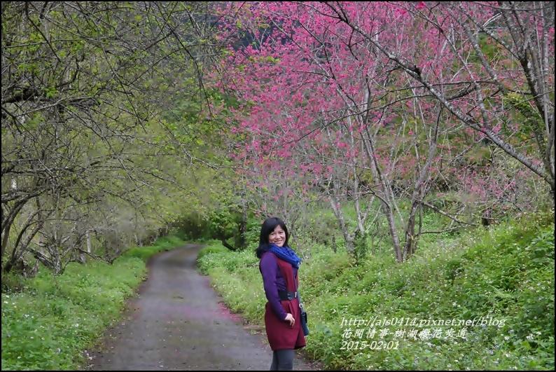 2015-02-樹湖櫻花步道22.jpg