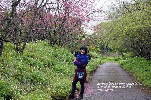 2015-02-樹湖櫻花步道28.jpg