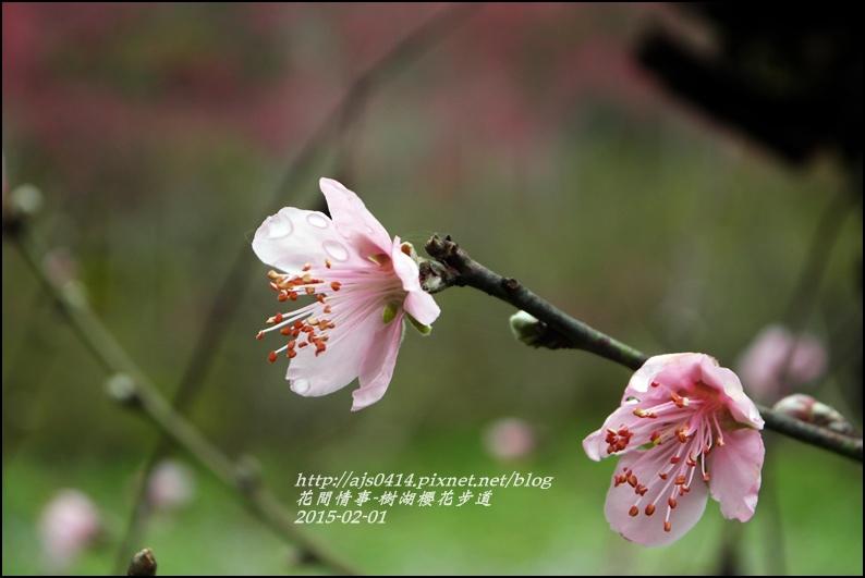 2015-02-樹湖櫻花步道30.jpg